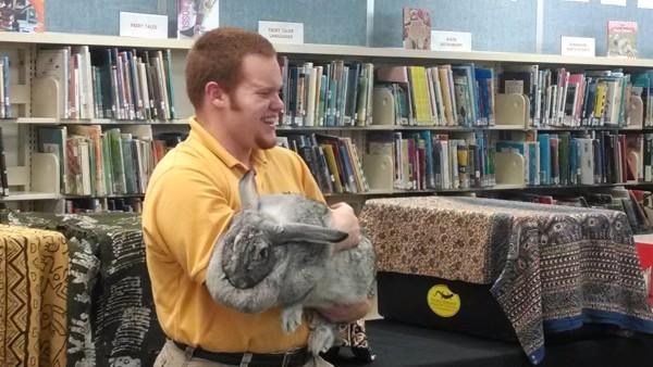 Animal Embassy - HUGE rabbit!